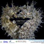 OBIETTIVO TERRA 2020 – 11a edizione. Ultimi giorni per partecipare al concorso nazionale dedicato alle bellezze e alle peculiarità delle Aree Protette d'Italia per celebrare la 50a Giornata Mondiale della Terra.