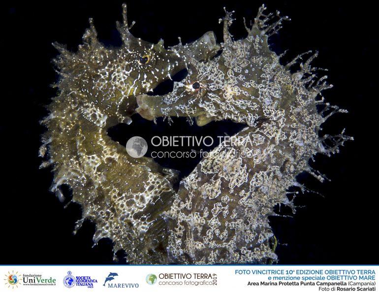 1 - SCARIATI Rosario_ AM Punta Campanella - Vincitrice OT2019 e MS Obiettivo Mare